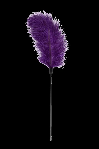 Federkitzler in violett