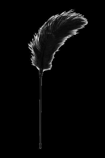 Federkitzler in schwarz